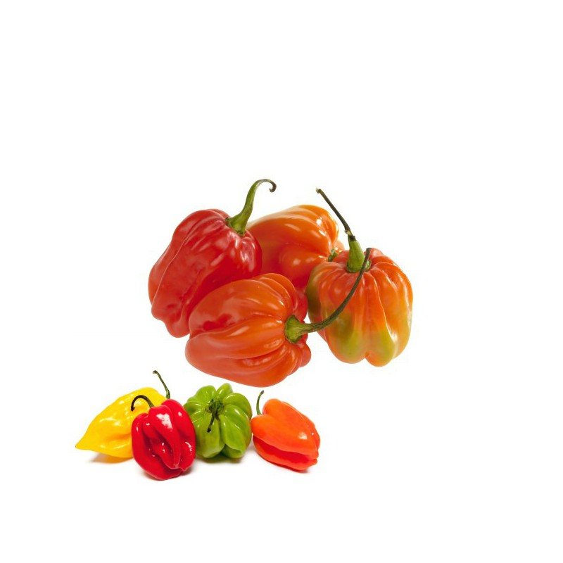 Piment antillais (martinique) 100g